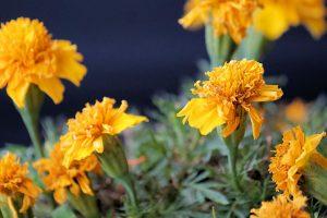 Flores vivas para los muertos