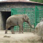 Acciones a favor del bienestar del hábitat natural