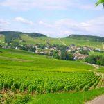 Borgoña Francia, encanta el paladar, sentidos y emociones