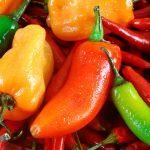 El chile, eficaz antibacteriano