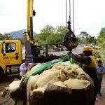 Comienza restauración de mamut descubierto en Galeana