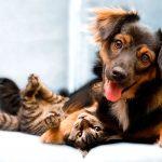 Estrena cadena especializada en mascotas dos tiendas en CDMX
