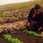 FAO reconoce experiencias de organizaciones de mujeres rurales mexicanas