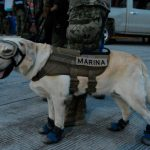 Frida, la rescatadora de personas en situaciones de catástrofe
