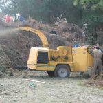 Habilita Probosque 19 centros de acopio para árboles de navidad