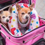 Un error humanizar a las mascotas