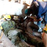 Más de 8 mil soldados apoyan a damnificados por el terremoto