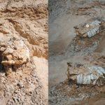 Necesario formar expertos en paleontología, considera especialista