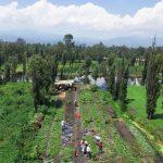 Más allá del tradicional paseo en trajinera por Xochimilco, con México best keps secrets, se podrá disfrutar de este sitio histórico de una manera distinta