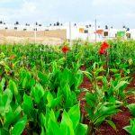 Utiliza UAM plantas para sanear sitios contaminados por la industria