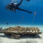 Arrecifes de coral, un tesoro en el mar mexicano