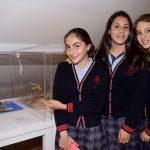 """Deambulan """"libres"""" tortugas golfinas en el Museo Soumaya"""