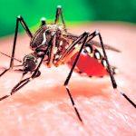 Virus del zika también puede afectar al corazón